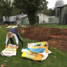 Tidying empty mulch bags. Cambridge Tree Trust