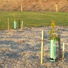 2015.11.26 Small trees and expressway planting. Cambridge Tree Trust