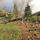 Extending the top planting 2. Cambridge Tree Trust