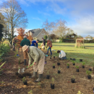 Extending the top planting 3. Cambridge Tree Trust
