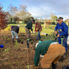 Extending the top planting 4. Cambridge Tree Trust