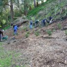 Lake Te Ko Utu.  Planting the Girl Guide bank  Aug. 2011- Cambridge Tree Trust