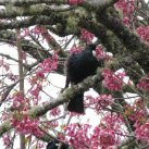 Tui. Sept. 2017- Cambridge Tree Trust